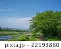 新緑の賀茂川 22193880