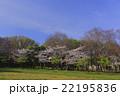 桜と新緑、青空の風景 22195836