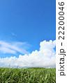 青空 雲 夏の写真 22200046