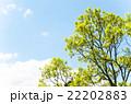 春イメージ 新緑と青空  22202883