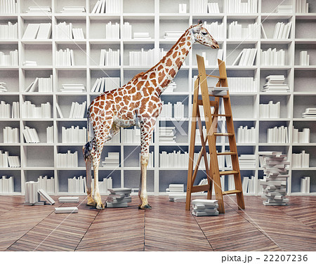 giraffe baby in the  library 22207236