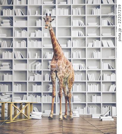 giraffe in the room 22207239
