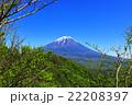富士山~春の芽吹き~ 22208397
