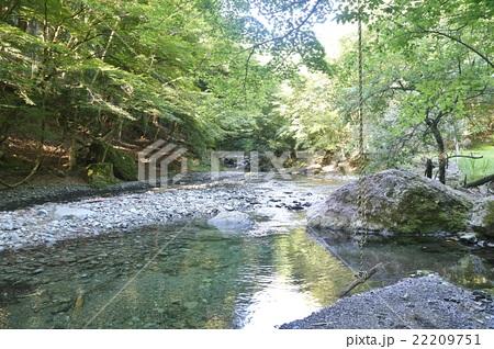 丹沢の渓流 22209751