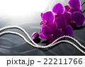 ピンクの胡蝶蘭 22211766
