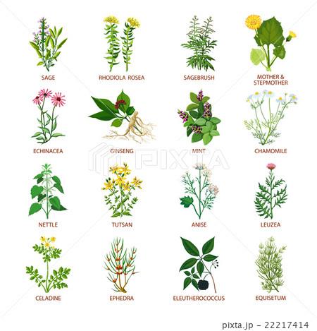 Medicinal Herbs Icons Flat 22217414