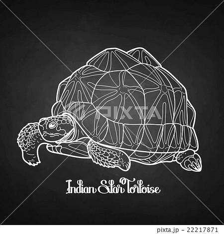 Indian star tortoiseのイラスト素材 [22217871] - PIXTA