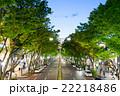 並木道・表参道・原宿・大通り(夜景) 22218486