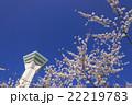 五稜郭タワーと満開の桜の花 22219783