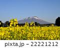 菜の花 花 植物の写真 22221212