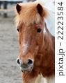 馬の顔 22223584