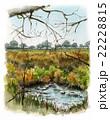 イエールの湿原 22228815