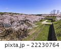 五稜郭公園の満開の桜の花 22230764
