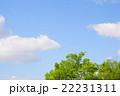 青空 木 緑の写真 22231311