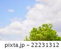 青空 木 緑の写真 22231312