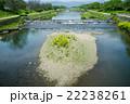 川 河川 賀茂川の写真 22238261