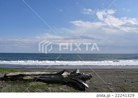 茅ヶ崎海岸の流木 22241329
