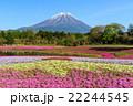 本栖湖リゾート 富士山 芝桜の写真 22244545