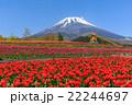 富士山 ぐりんぱ チューリップの写真 22244697