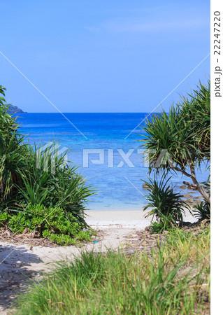 ヒズシビーチ 阿嘉島 22247220