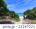 阿嘉島 海 夏の写真 22247221