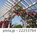 薔薇園のアーチ 22253764