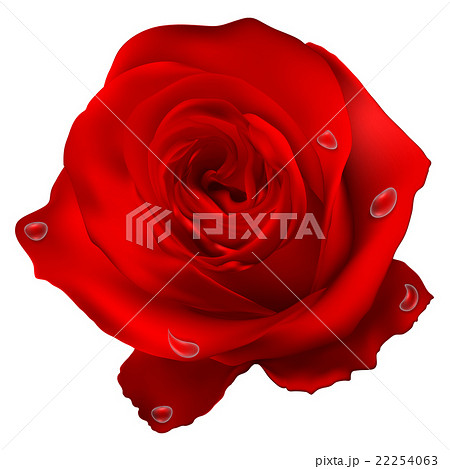 Realistic red vector rose eps 10 22254063 pixta realistic red vector rose eps 10 voltagebd Choice Image