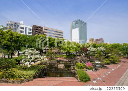 名古屋・栄・都市風景 セントラルブリッジからの眺め 久屋大通公園 ロサンゼルス広場の花水木 22255509