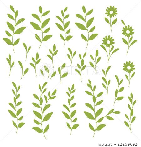 植物のイラストのイラスト素材 22259692 Pixta