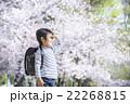 桜と新学期の男の子 22268815