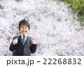 桜と新学期の男の子 22268832