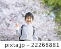 桜と新学期の男の子 22268881