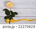 黄色い 黄 黄色の写真 22270629