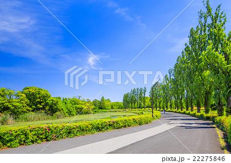 水元公園 ポプラの並木道 22275846
