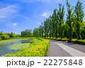 水元公園 ポプラ 並木道の写真 22275848