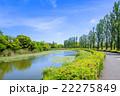 水元公園 ポプラ 並木の写真 22275849