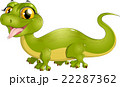 beautiful green lizard 22287362
