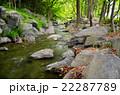 川 せせらぎ 小川の写真 22287789