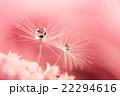 植物 滴 水滴の写真 22294616