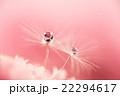 植物 滴 水滴の写真 22294617
