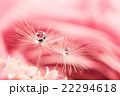 植物 滴 水滴の写真 22294618