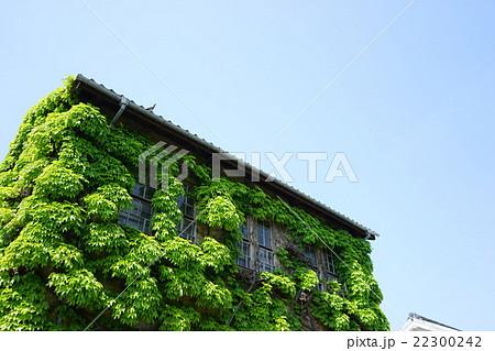 蔦に覆われた家 葉っぱ 植物 ツ...