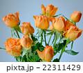 花 バラ オレンジ 複数 22311429