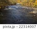 奥入瀬渓流 紅葉 秋の写真 22314007
