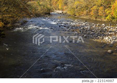 秋の奥入瀬渓流 22314007