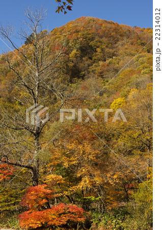 紅葉の山 22314012