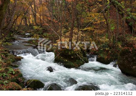 秋の奥入瀬渓流 22314112