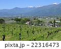 山 山岳 葡萄の写真 22316473