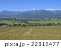 山 葡萄 葡萄畑の写真 22316477