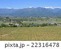 山 葡萄 葡萄畑の写真 22316478